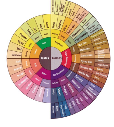 coffee tasting wheel